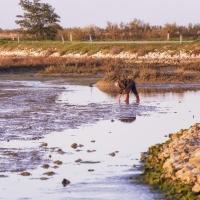 Paesaggi-cavallino1_Raccoglitore-di-mitili-in-laguna-durante-la-bassa-marea-Mussel-harvester-in-the-lagoon-at-low-tide_marco-santin