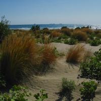 Dune in località Alberoni, Lido di Venezia